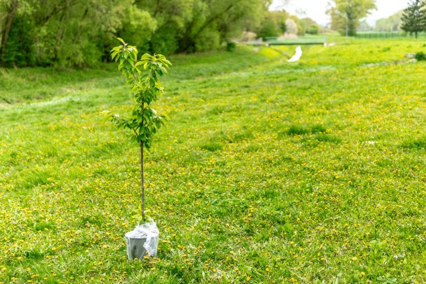 Update: Join us for tree planting